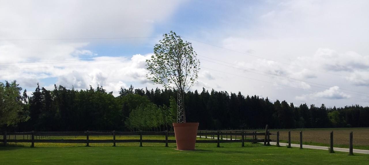 Baum im Blumenkübel