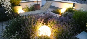 Mondkugeln, Lavendel, Yucca