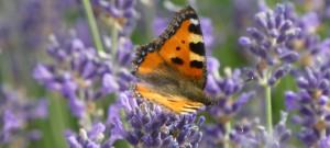 Schmetterlinge auf dem Dach